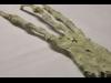 يد عملاقة بثلاثة اصابع فقط قد تكون لكائن فضائي