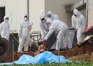 المنظمة العالمية لصحة الحيوان: إصابة 17 دولة في أوروبا بأنفلونزا الطيور