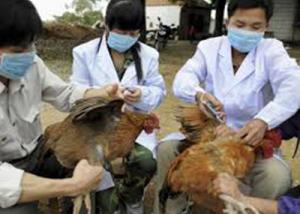 مقدونيا تسجل انتشار فيروس أنفلونزا الطيور إتش5إن8 في مزرعة