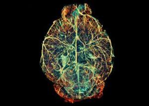 أحد بروتينات الدماغ قد يكون السبيل للوقاية من الزهايمر