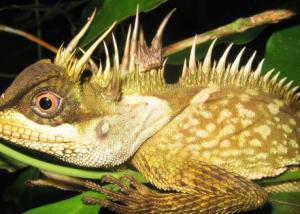 اكتشاف 163 نوعاً جديداً من الأحياء في منطقة آسيوية